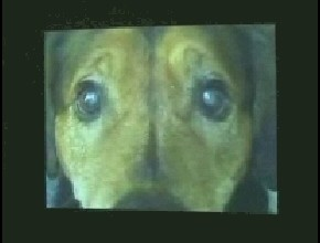Dogs (Portage R.P.)