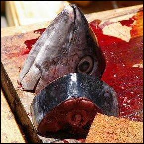Furie de sanghe (photo: myspace.com/fibreparalleleteatro)
