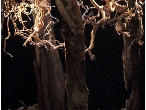 Nel bosco - II studio