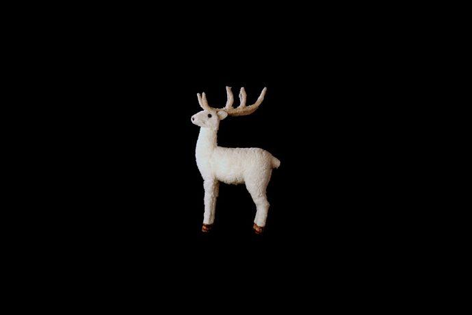 Cervo bianco © Tomaso Mario Bolis
