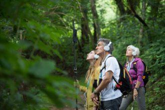 Pleiadi (Alberi maestri, in mezzo al bosco) Photo: Alvise Crovato